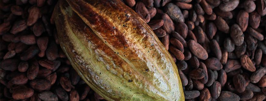 Kakao - Fairtrade Norge
